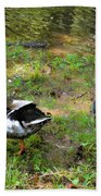 Pair Of Mallard Duck 6 Beach Towel