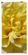 Pale Yellow Rose Beach Towel