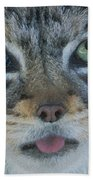 Pallas Cat Beach Towel