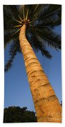 Palm In Blue Sky Beach Towel