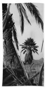 Palm In View Bw Horizontal Beach Towel