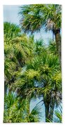 Palmetto Palm Trees In Sub Tropical Climate Of Usa Beach Towel