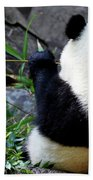 Panda Bear Eating Bamboo Beach Towel