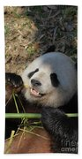 Panda Bear Laying On His Back And Eating Bamboo Beach Towel