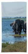 Panorama Of Elephant Herd Drinking From River Beach Towel