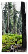 Panoramic Forest Beach Towel
