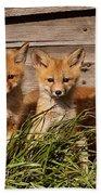 Panoramic Fox Kits Beach Towel