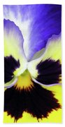 Pansy 10 - Thoughts Of You Beach Towel
