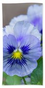 Pansy Flowers Beach Towel