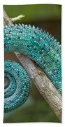 Panther Chameleon Tail Beach Towel