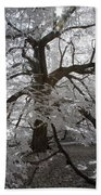 Paper Mulberry In Infrared Beach Towel