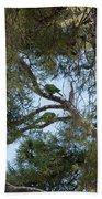 Parakeets Beach Towel