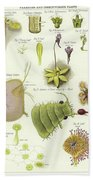 Parasites And Insectivorous Plants Beach Towel