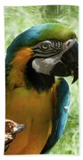 Parrot Eating Nut Beach Towel