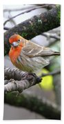 Partial-migrator House Finch Beach Towel