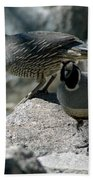 Partridge Pair Reno Nv Beach Towel