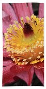 Pasque Flower Macro Beach Towel