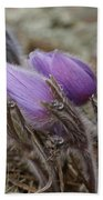 Pasque Flower Watercolor Beach Towel