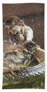 Pass The Towel Please: A House Sparrow Beach Towel