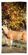 Passing Buck In Autumn Field Beach Towel