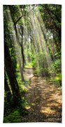 Path In Sunlit Forest Beach Towel by Elena Elisseeva
