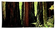Path Through The Forest Edge . 7d5432 Beach Towel