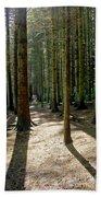 Path Through The Woods. Beach Towel