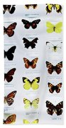 Pattern Made Out Of Many Different Butterfly Species Beach Towel