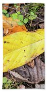 Paw Paw Leaf Fall Colors Beach Towel