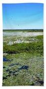 Paynes Prairie View Beach Towel