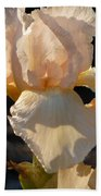Peach Bearded Iris Beach Towel