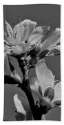 Peach Blossoms In Grayscale Beach Towel