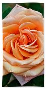 Peach-colored Rose At Pilgrim Place In Claremont-california   Beach Towel