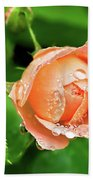 Peach Rose In The Rain Beach Towel
