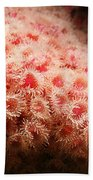 Peachy Urchins Beach Towel