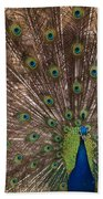 Peacock At The Fort Beach Towel
