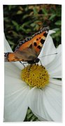 Peacock Butterfly On Cosmos Beach Towel