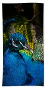 Peacock Closeup Beach Towel