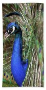 Peacock Mating Season Beach Towel