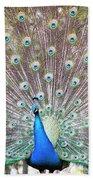Peacock Show Beach Towel