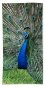 Peacocks Glory Beach Towel