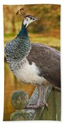 Peahen In Autumn Beach Towel