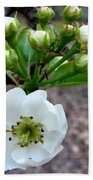 Pear Tree Blossom 3 Beach Towel