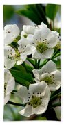 Pear Tree Blossoms 1 Beach Towel