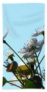 Pear Tree Blossoms 5 Beach Towel