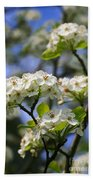 Pear Tree Blossoms Beach Towel