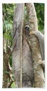 Peek-a-boo Sloth Beach Towel