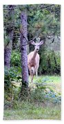 Peekaboo Deer Beach Towel