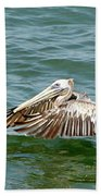 Pelecan In Flight Beach Towel