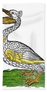 Pelican, 1560 Beach Towel
